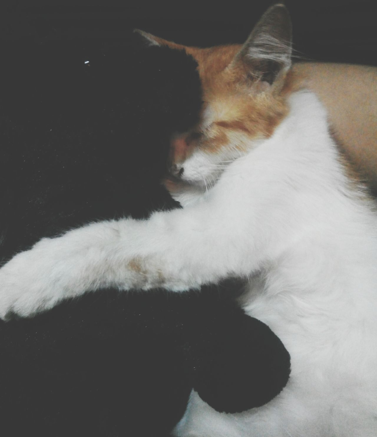 because they are loving each other 😍😘 Pets One Animal Indoors  Day Looking At Camera Cute Pets Doll My Lovely  Whisker Kitten Happiness Large Group Of People Domestic AnimalsNo People Togetherness Cheerful Indoors  Animal Dog Mammal Animal Themes Domestic Cat Close-up