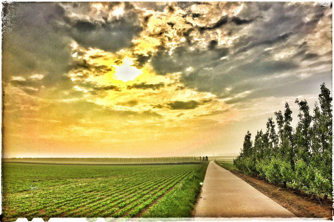 Enjoying my daily morning walk Relaxing Taking Photos Enjoying Life Detox Time