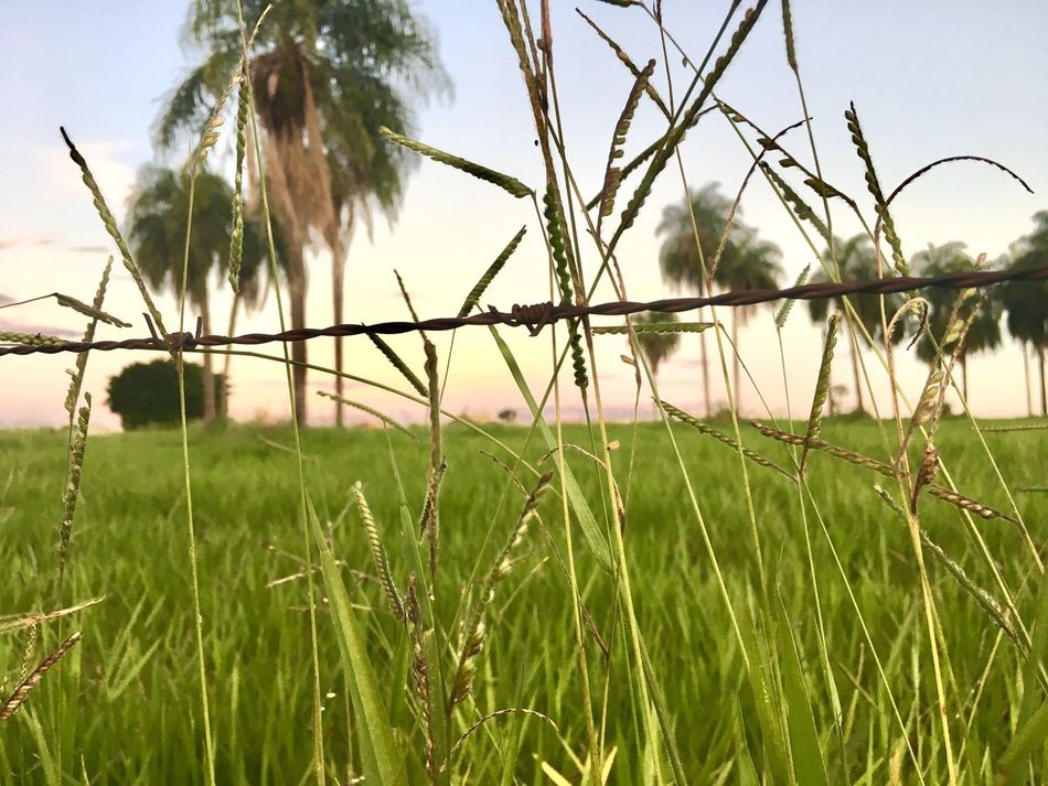 Growth Nature Grass Plant Field Outdoors Day No People Rural Scene Sky Tranquil Scene Tranquility Beauty In Nature Agriculture Landscape Scenics Cereal Plant Close-up Animal Themes First Eyeem Photo Popular Photos Exceptional Photography Best Photos EyeEm Best Shots