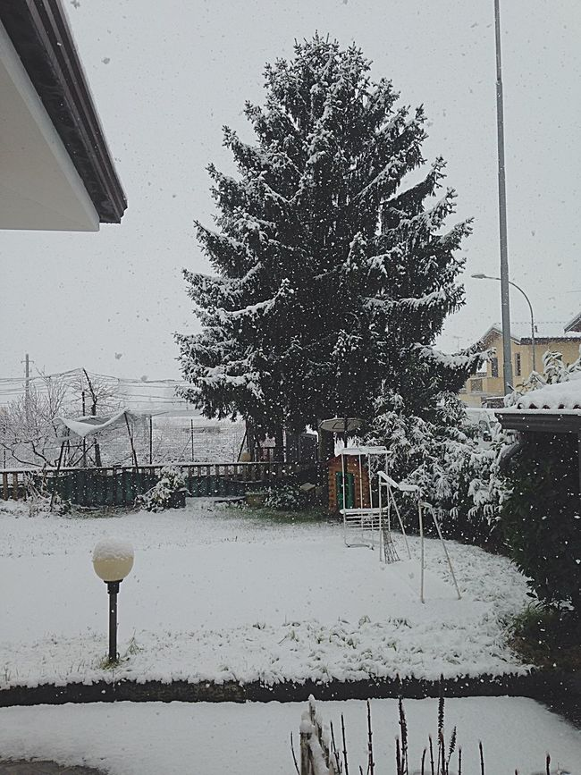 Snow Today Homesweethome Allwhite The Purist (no Edit, No Filter) Nature Winter