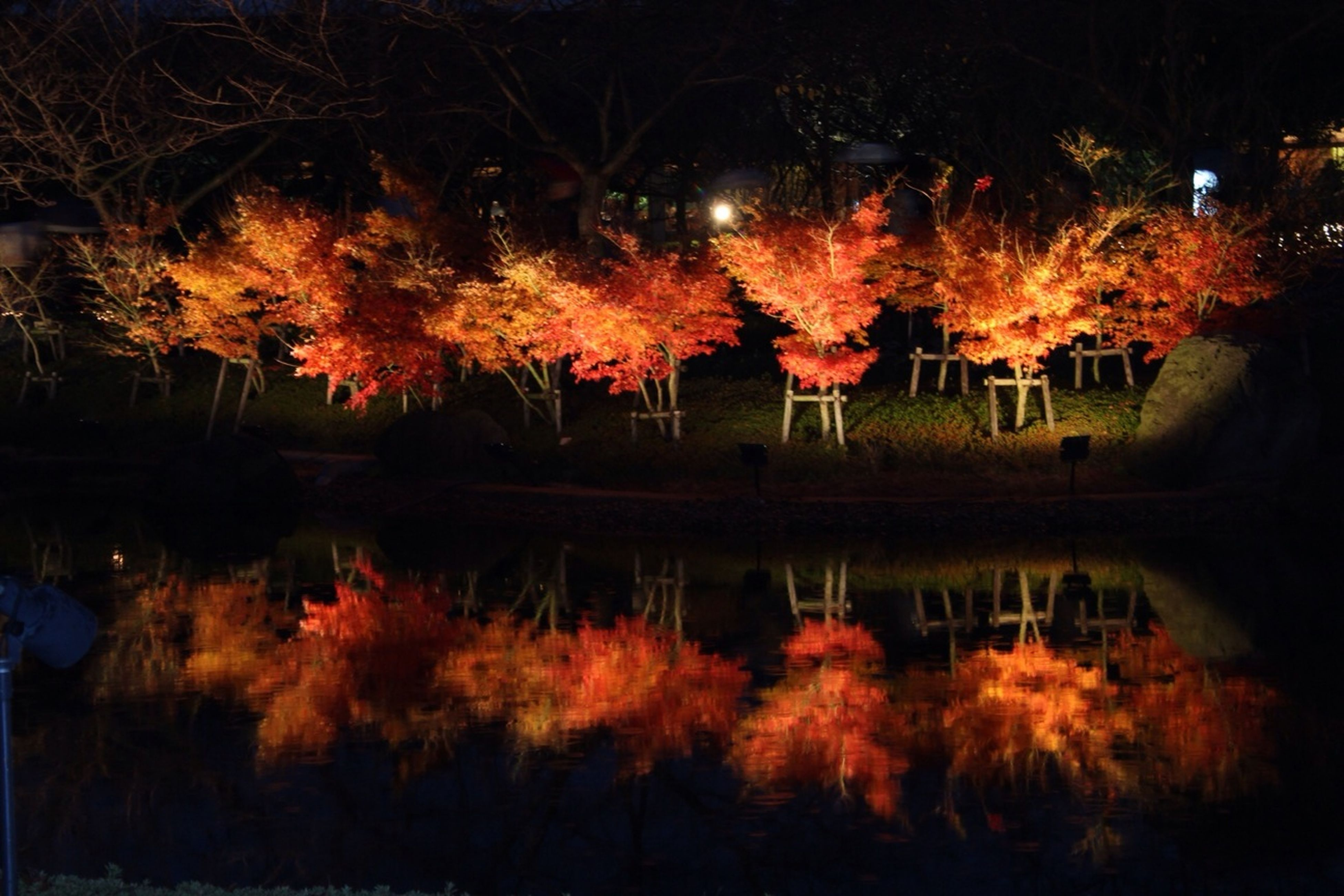 tree, illuminated, night, water, reflection, lake, tranquility, nature, orange color, tranquil scene, beauty in nature, pond, scenics, growth, outdoors, sunset, autumn, river, sky, bare tree