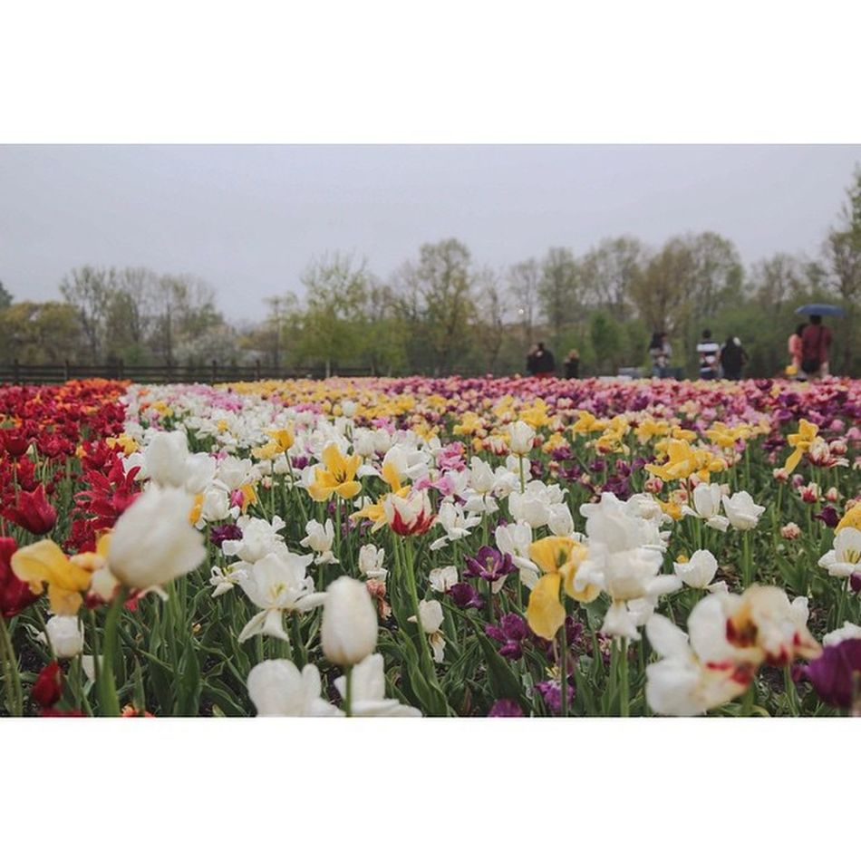 Beautiful stock photos of muttertag, flower, freshness, fragility, multi colored