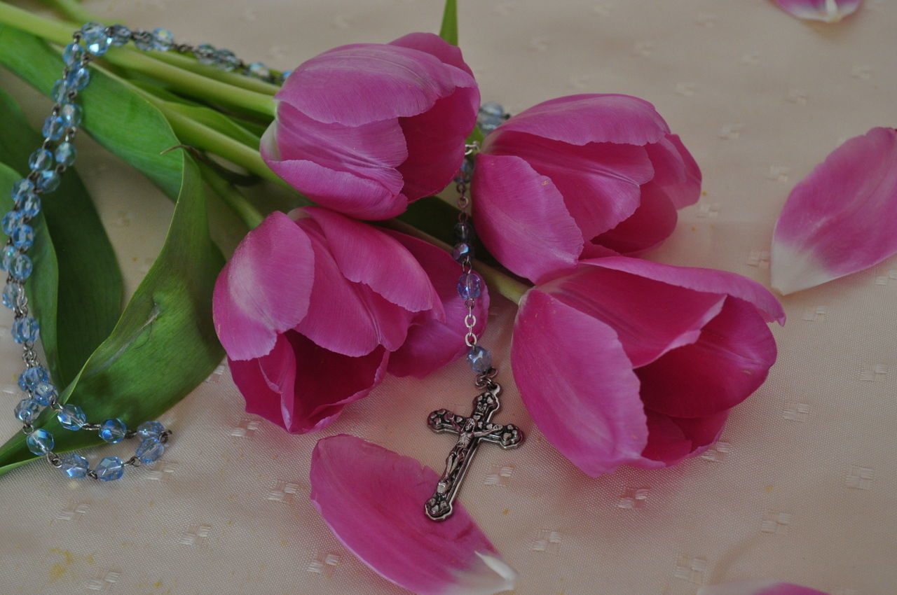 Beauty In Nature Chistian Church Close-up Cross Day Flower Flower Head Fragility Freshness Growth Holiday Indoors  Leaf Nature No People Petal Pink Color Plant Praying Religion Rosary Rosary Beads Tulips Water