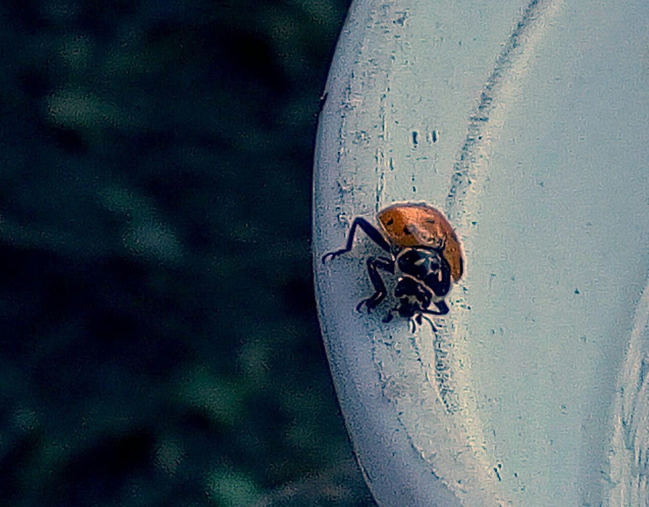 one animal, animal themes, animals in the wild, insect, animal wildlife, no people, close-up, day, outdoors, nature