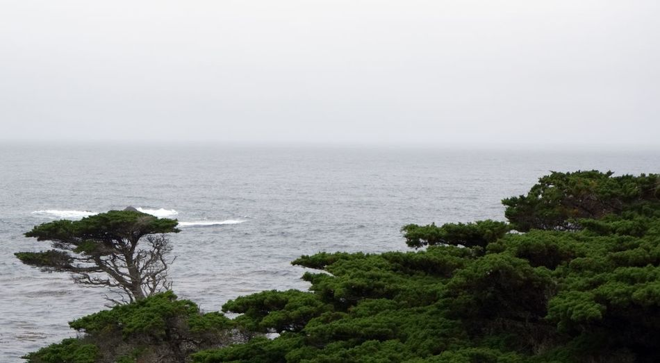 Sony A6000 Point Lobos State Park CA California Sea Water Nature Horizon Over Water Scenics Beauty In Nature Tranquility Tranquil Scene No People Tree Sky Day
