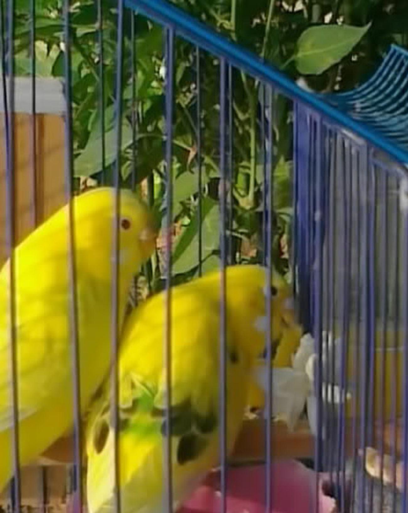 my lovely Birds: Mas3oodd & Mas3ooda <3 Azzawya, Libya