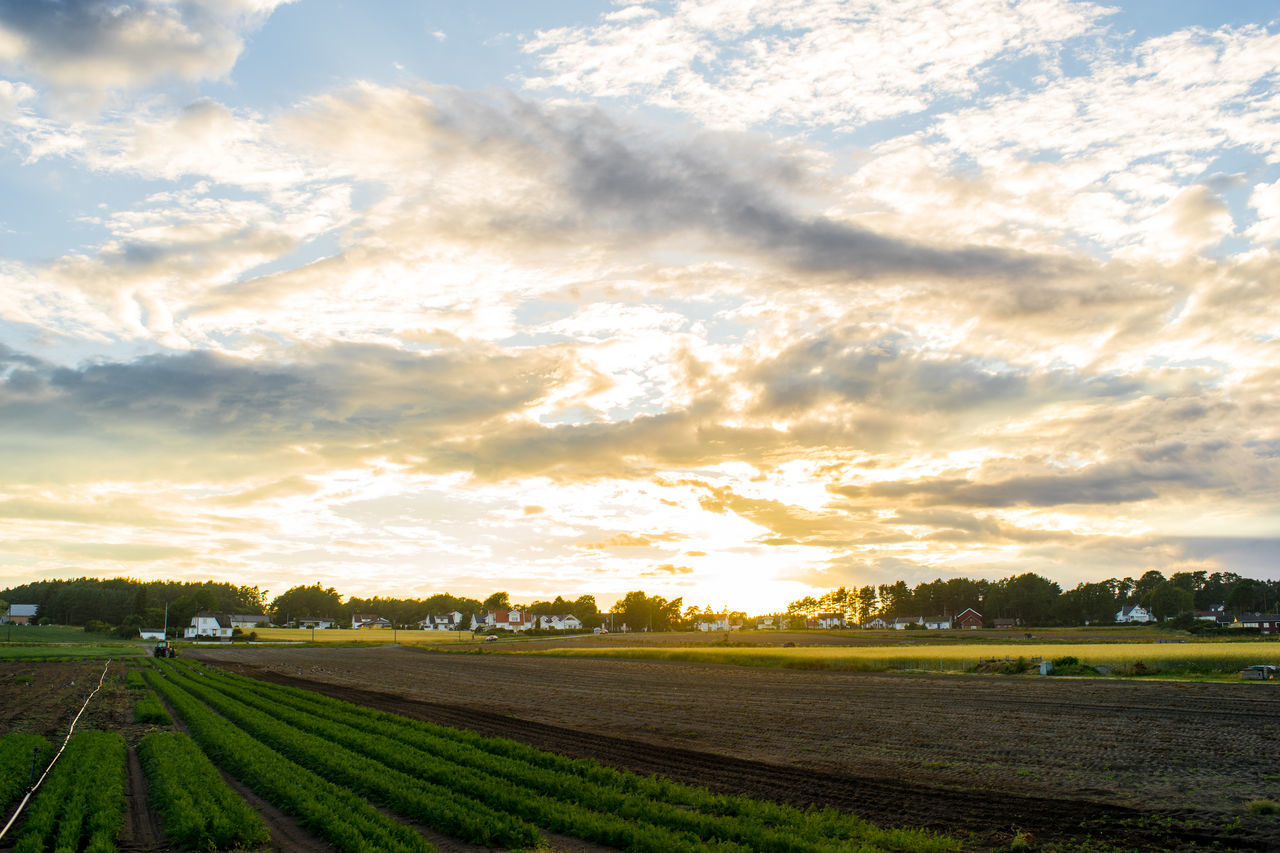 Farmland Agriculture Beauty In Nature Carrot Field Cloud - Sky Farm Farm Farmland Field Growth Landscape Nature Nevlunghavn No People Norway Outdoors Scenics Sky Sunlight Sunset Tranquil Scene Tranquility