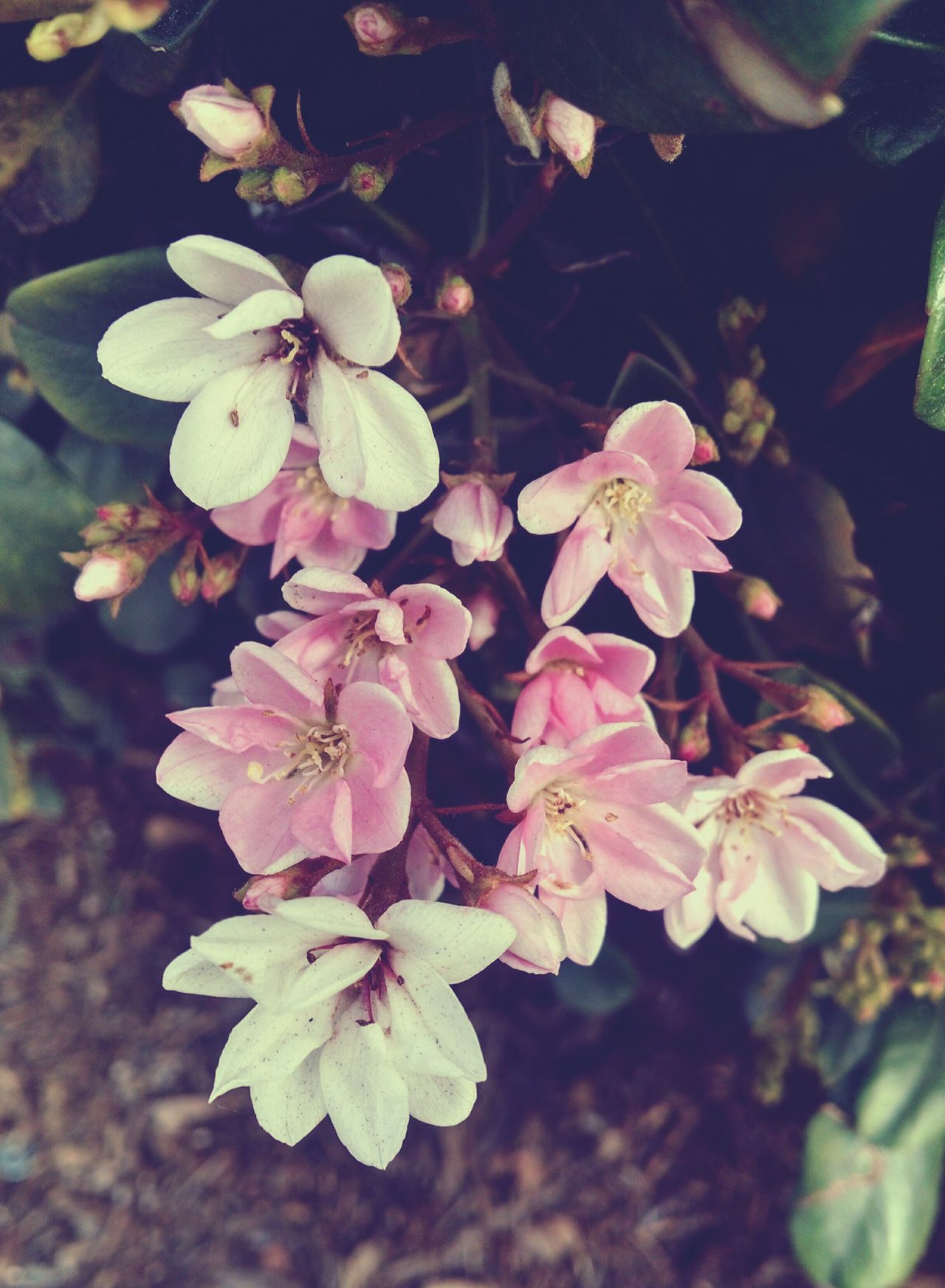 Came across these while sitting in my car. Flowers Nature EyeEm Nature Lover Eye Em Best Shots - Flowers South1:) On The Road Landscape_photography Pretty In Pink Scenary Smile ✌