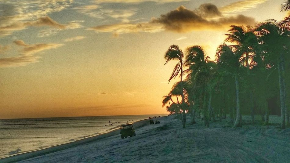 Atmosphere Beach Coastline Coconut Trees And Beaches Desert Horizon Over Water Light Outdoors Palm Tree Palm Trees Remote Sand Sea Shore Summer Tranquil Scene Tranquility Tropical Beaches Tropical Climate Vacations Water