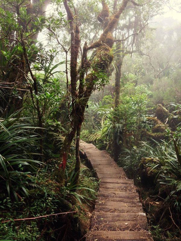 Welcome to the jungle! Beauty In Nature Day Exploring Forest Grass Growth Hiking Jungle Landscape Nature No People Outdoor Photography Outdoors Plant Rainforest Reunion Island Salazie Scenics The Way Forward Tranquil Scene Tranquility Travel Destinations Tree Walkway Wanderlust The Great Outdoors - 2017 EyeEm Awards EyeEm Selects Lost In The Landscape Perspectives On Nature