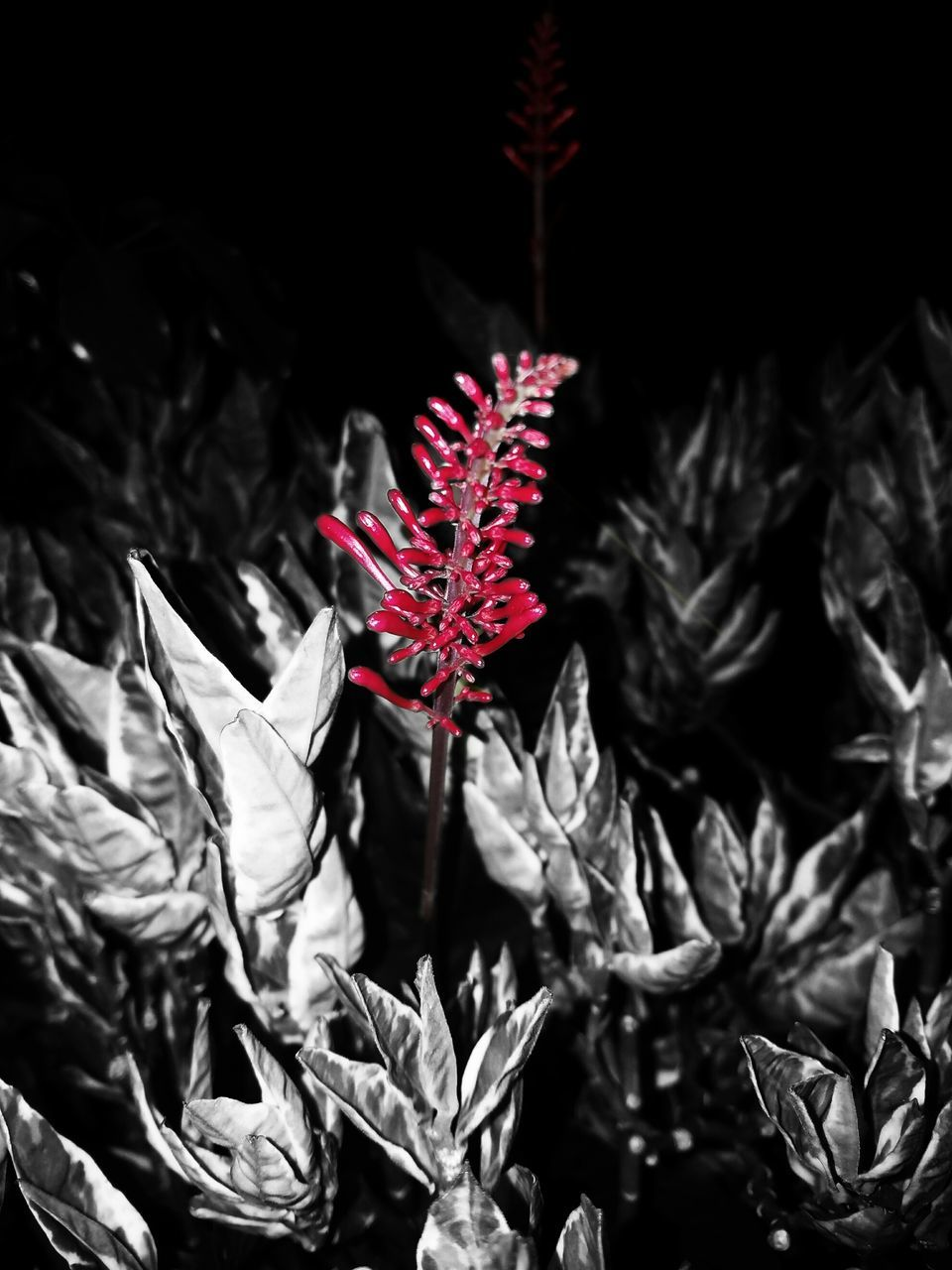 plant, no people, leaf, growth, outdoors, nature, night, close-up, beauty in nature, fragility, freshness