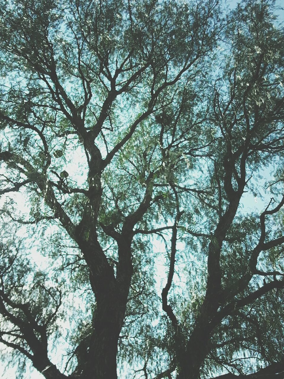 tree, low angle view, nature, branch, day, outdoors, beauty in nature, forest, growth, no people, tranquility, sky