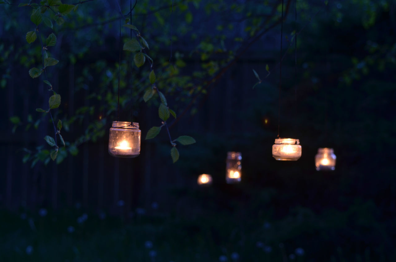illuminated, lighting equipment, night, glowing, no people, plant, outdoors, growth, nature, leaf, electricity, tree