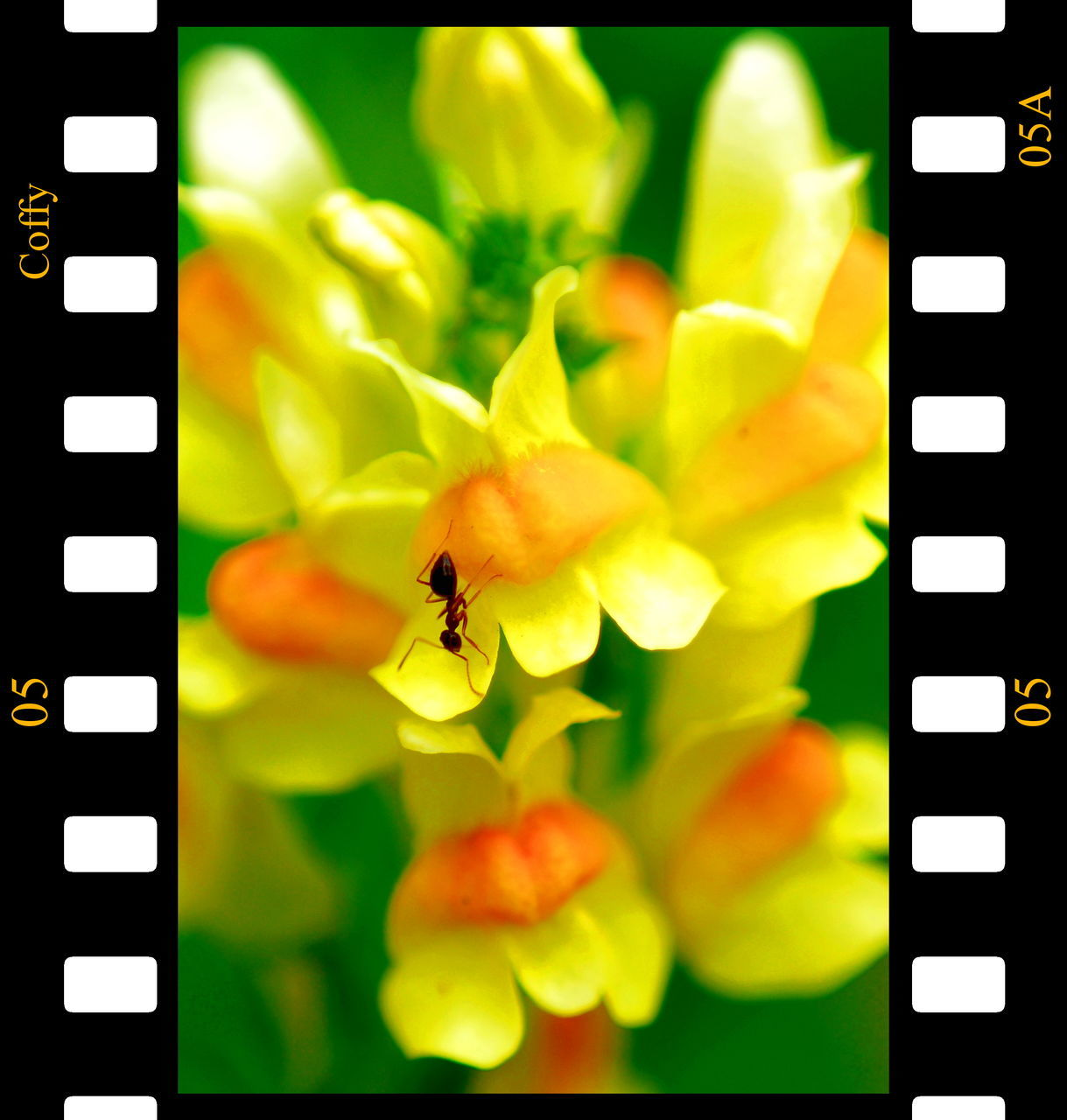 insect, bee, one animal, animal themes, technology, animals in the wild, yellow, no people, flower, indoors, close-up, nature, buzzing, day
