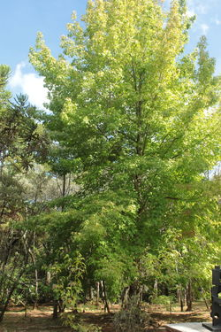 Beauty In Nature Day Green Color Nature No People Outdoors Tree
