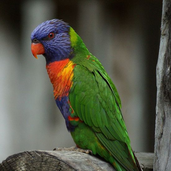 Here is a Snapshot I took with my Sony A77 DSLR Camera when I was down in Sanantonio at the Zoo . Tropical Bird Exotic Colors Beautiful Nofilter Lovemycamera :)