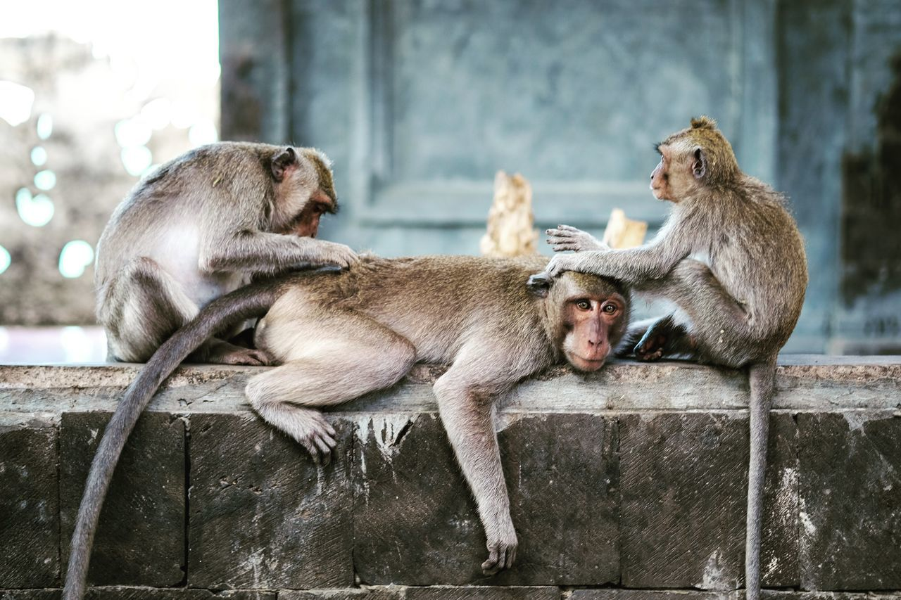 Animals In The Wild Animal Wildlife Outdoors Day Mammal Animal Themes No People Young Animal Monkey Relax Lazyday