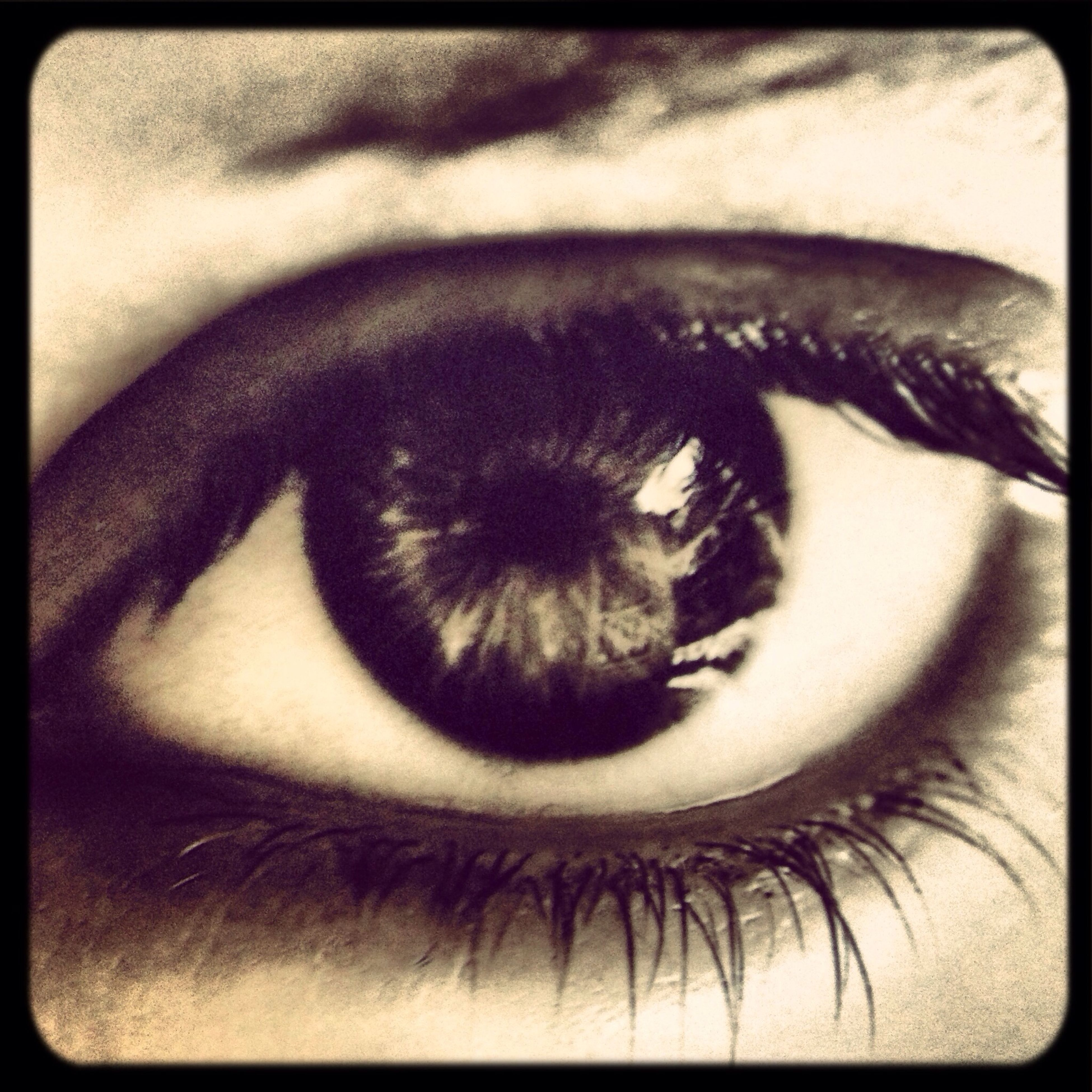 close-up, one animal, animal themes, part of, auto post production filter, indoors, transfer print, unrecognizable person, human eye, sensory perception, looking at camera, eyelash, human skin, extreme close up, extreme close-up, person, eyesight