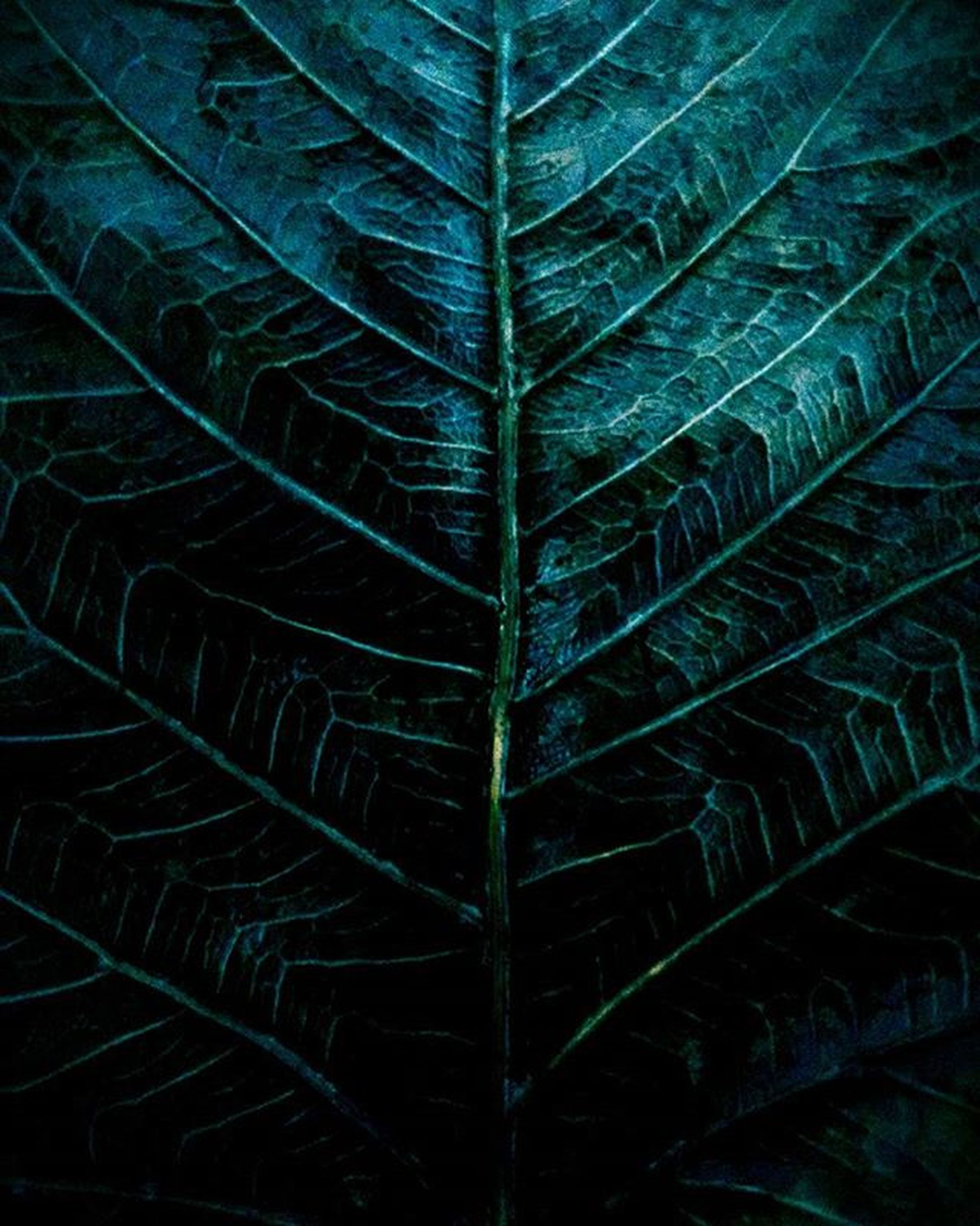 The Peepal Tree. Sacredfig Peepaltree Trippy Abstractphotography Asimphotography