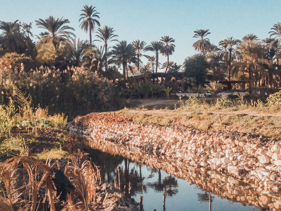 Beauty In Nature Day EyeEm Best Shots Growth Nature No People Outdoors Palm Tree Reflection Scenic Scenics Sky Tranquil Scene Tranquility Tree Water