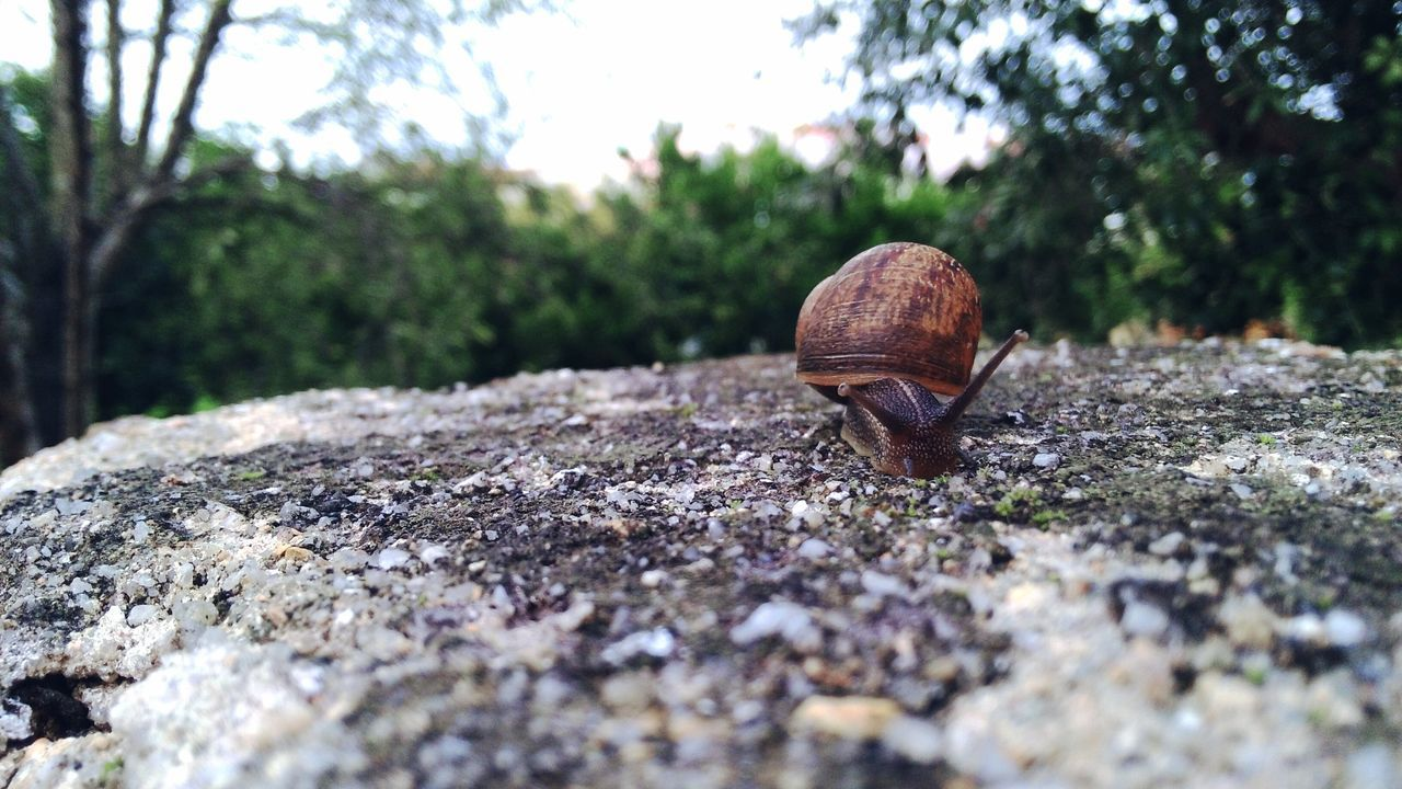 Snail Nature Animal Themes 'Dieu Don Close-up No People Outdoors Slimy One Animal Fragility Day Surface Level Nature Photography Nature_perfection Nature Lover Snail Shells Snail🐌 Snails Pace Green Nature Green Trees Snail Plant