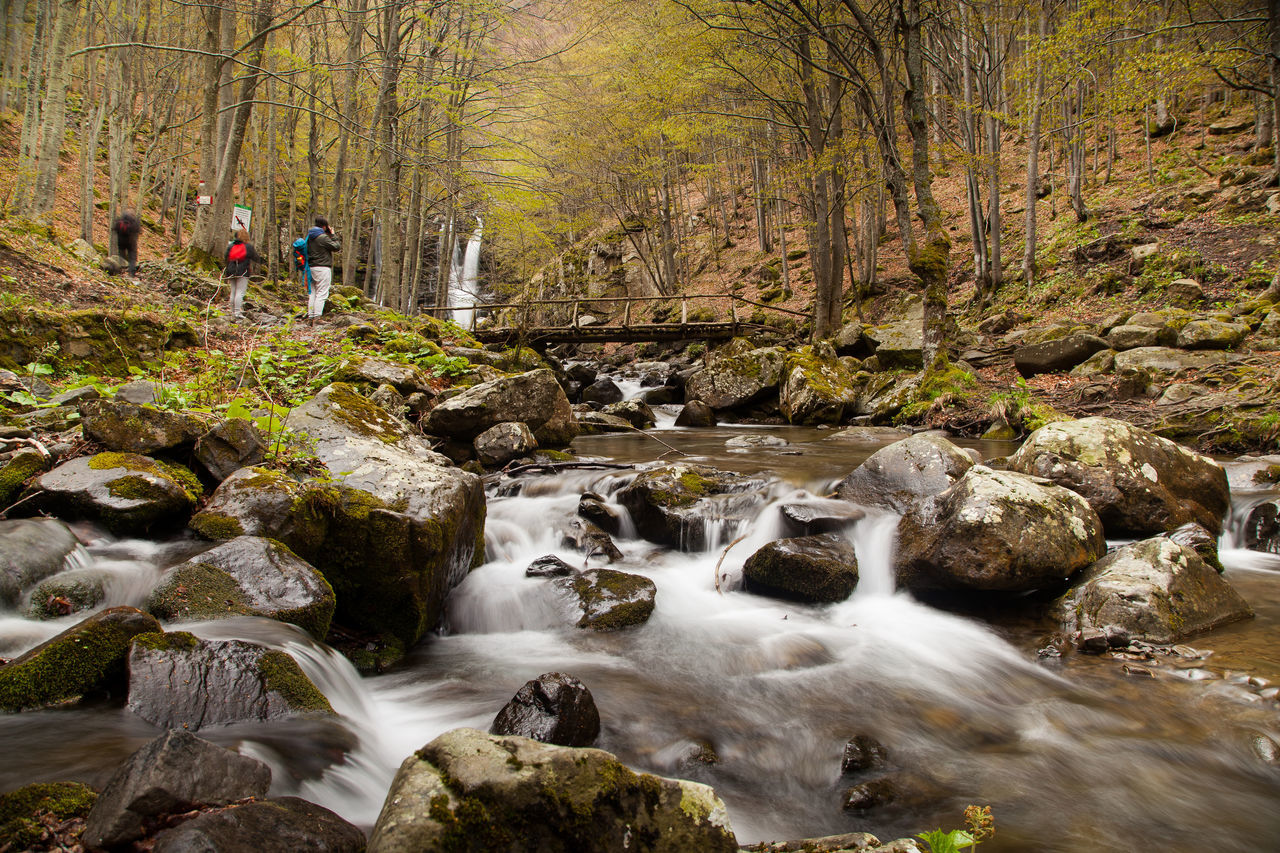 river stream amidst trees in forest Appenninotoscoemiliano Beauty In Nature Cascata Dardagna Day Forest Italy Long Exposure Motion Nature No People Outdoors River Rock - Object Scenics Silky Water Stream - Flowing Water Tranquil Scene Tree Water Waterfall