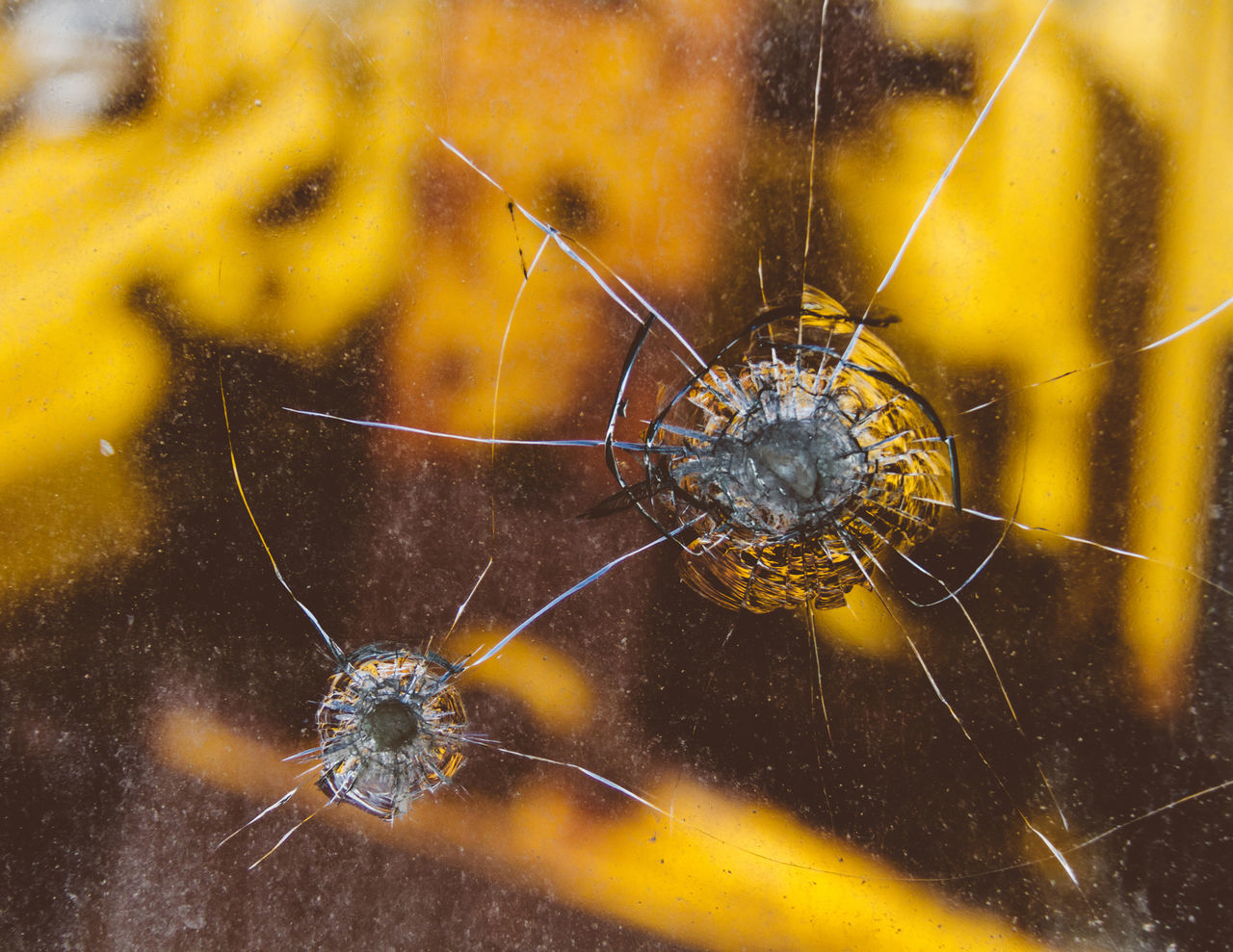 spider, spider web, one animal, animal themes, insect, animals in the wild, web, animal wildlife, survival, no people, animal leg, close-up, nature, day, outdoors, fragility