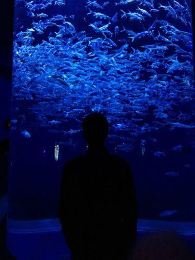 Fish and natur Taking Photos Hardlife Heartbeat Moments