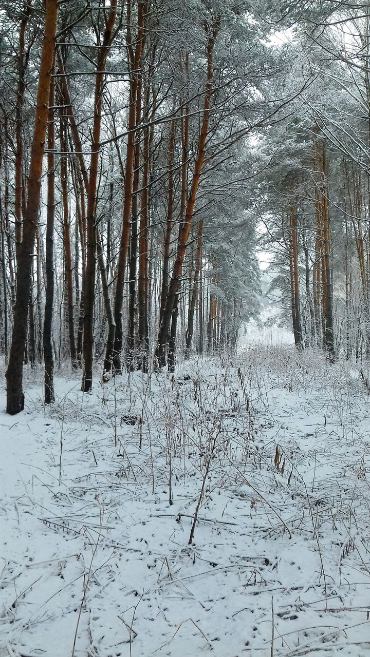 snow, winter, nature, cold temperature, forest, tree, beauty in nature, tranquil scene, tranquility, scenics, non-urban scene, landscape, tree trunk, woodland, no people, outdoors, growth, day, bare tree, branch, sky
