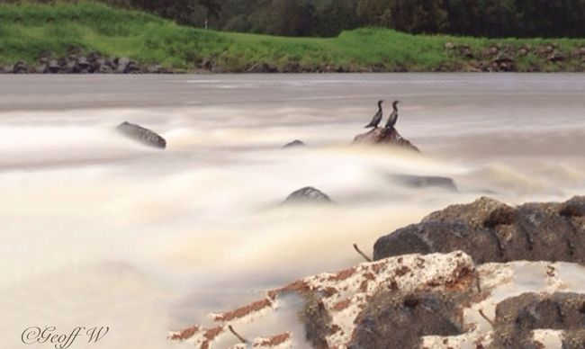 Another local shot at the river, Gold Coast