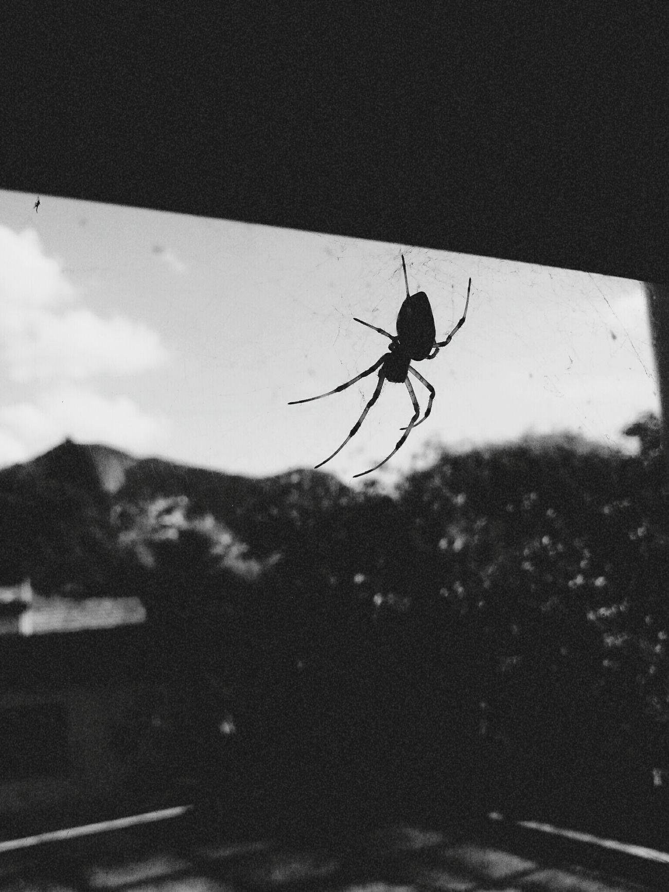 Spider Spider Nature Incrible Foda Medo