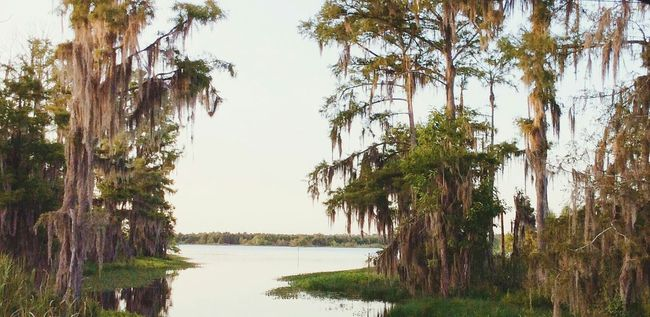 The Great Outdoors - 2015 EyeEm Awards Louisiana Swamp