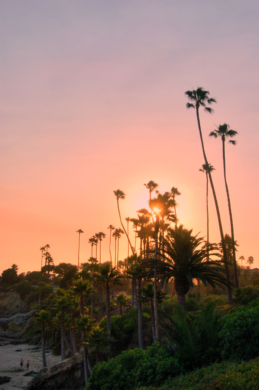 Laguna Beach, CA Landscape Nature Outdoors Palm Trees Sky Southern California Sunset EyeEmNewHere