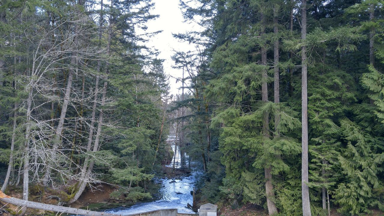 tree, forest, nature, waterfall, river, growth, beauty in nature, water, no people, vegetation, outdoors, landscape, scenics, day, sky