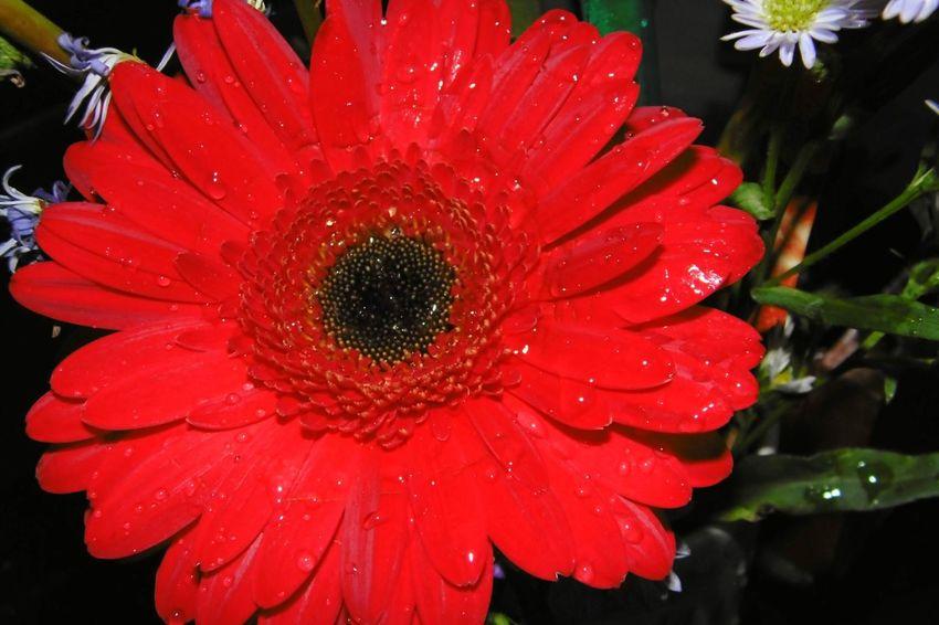 Flores Y Más Flores Flores Y Texturas Flores Rojas Gerberas Jilroa Panasonic Dmc Lz40