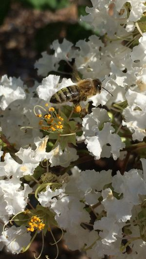 Got this nice shot of this bee with a sack of Pollen on its leg