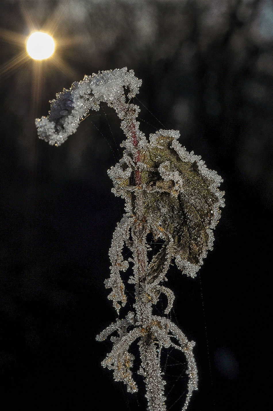 Botany Close-up Flower Focus On Foreground Fragility Frozen Glowing Marcokleinphotography Nature Plant Sun