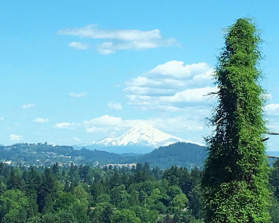 Mt. Hood from the west side of the Willamette River on a Beautiful late spring day Mountain Sky Tree Nature Landscape Tranquility Scenics Blue Beauty In Nature No People Tranquil Scene Day Outdoors Remote Lake Oswego Portland Oregon Willamette View Growth Building Exterior Cloud - Sky Wilderness Area Architecture