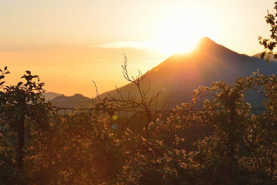 Dietro la siepe osservo il sole che tramonta sul monte Taburno Siepe Rincospermum Tramonto Sera Luce E Ombra Montesarchio Sole Montagna Provincia Di Benevento Campania Sannio