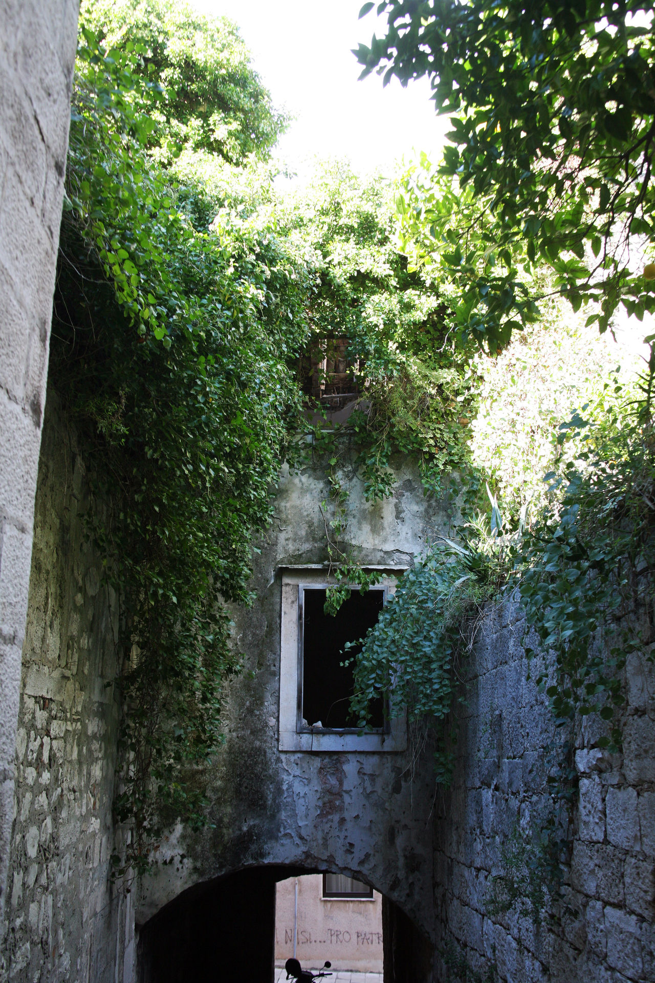 Korcula ancient architecture stone details,Croatia,Europe,3 Abandoned Adriatic Coast Ancient Architecture Building Exterior Built Structure Croatia Day Eu Europe Ivy Korčula Nature No People Old Outdoors Ruin Street Tourism Tree Urban Winter