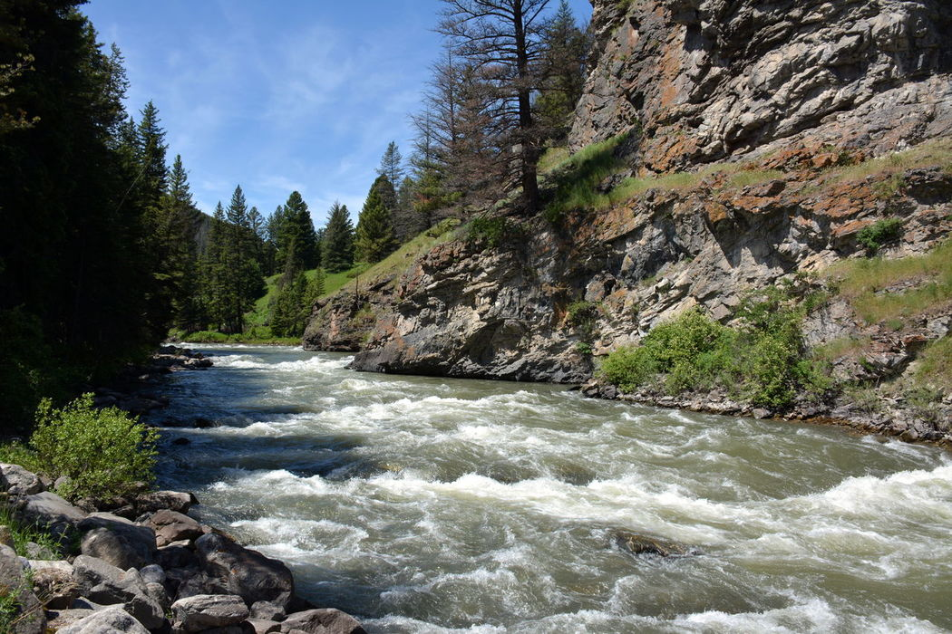 A River Runs Through It Beautiful Day Beautiful Nature Beauty In Nature Canyon Cliff EyeEm Nature Lover Fast Rapid Water Gallatin River Geology Montana Mountain Nature Powerful River Rock Rock - Object Rock Formation Scenics Stream Tranquil Scene Trees And Water Water Water_collection Splash