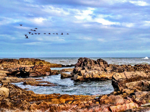 Birds #birds #family #trip Animal Themes Animals In The Wild Beauty In Nature Bird Cloud - Sky Coordination Day Flock Of Birds Flying Horizon Over Water Large Group Of Animals Mid-air Nature No People Outdoors Rock - Object Scenics Sea Sky Teamwork Togetherness Water Let's Go. Together.
