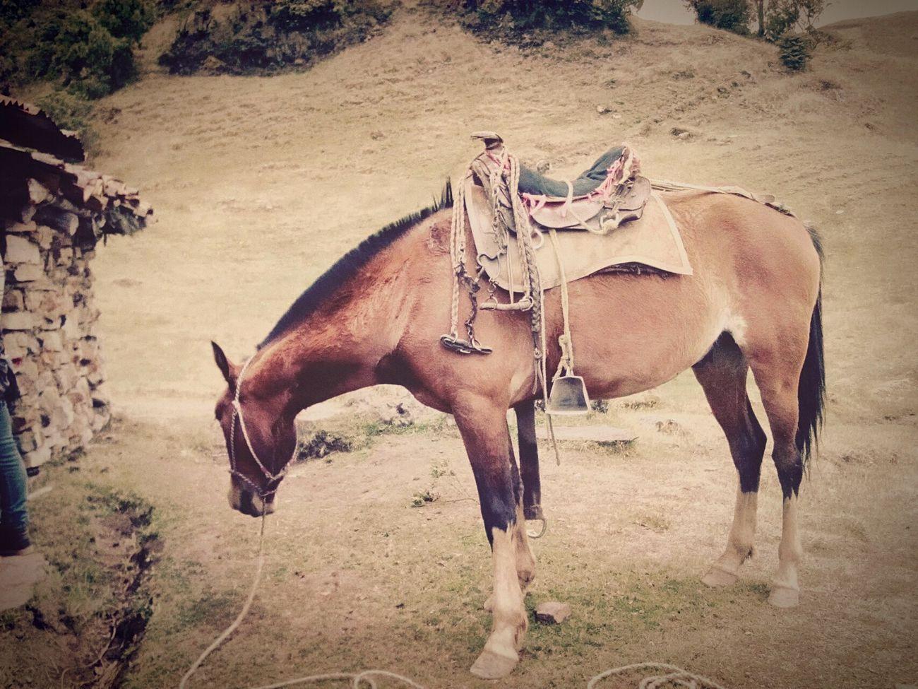 Casualphotography Horse Life