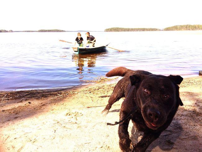 Labrador Retriever Crazydog Sand Beachmoments Beach JustAnotherDay