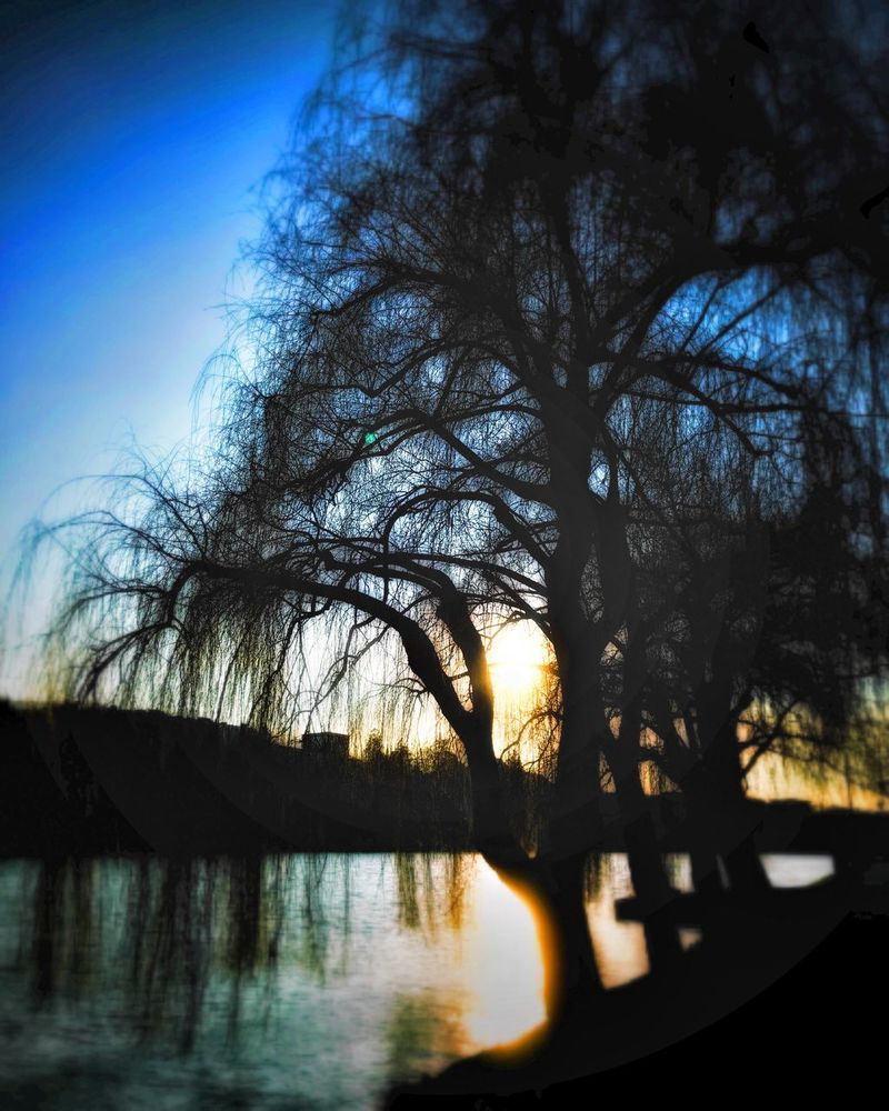 Sunset Tree Sky Nature