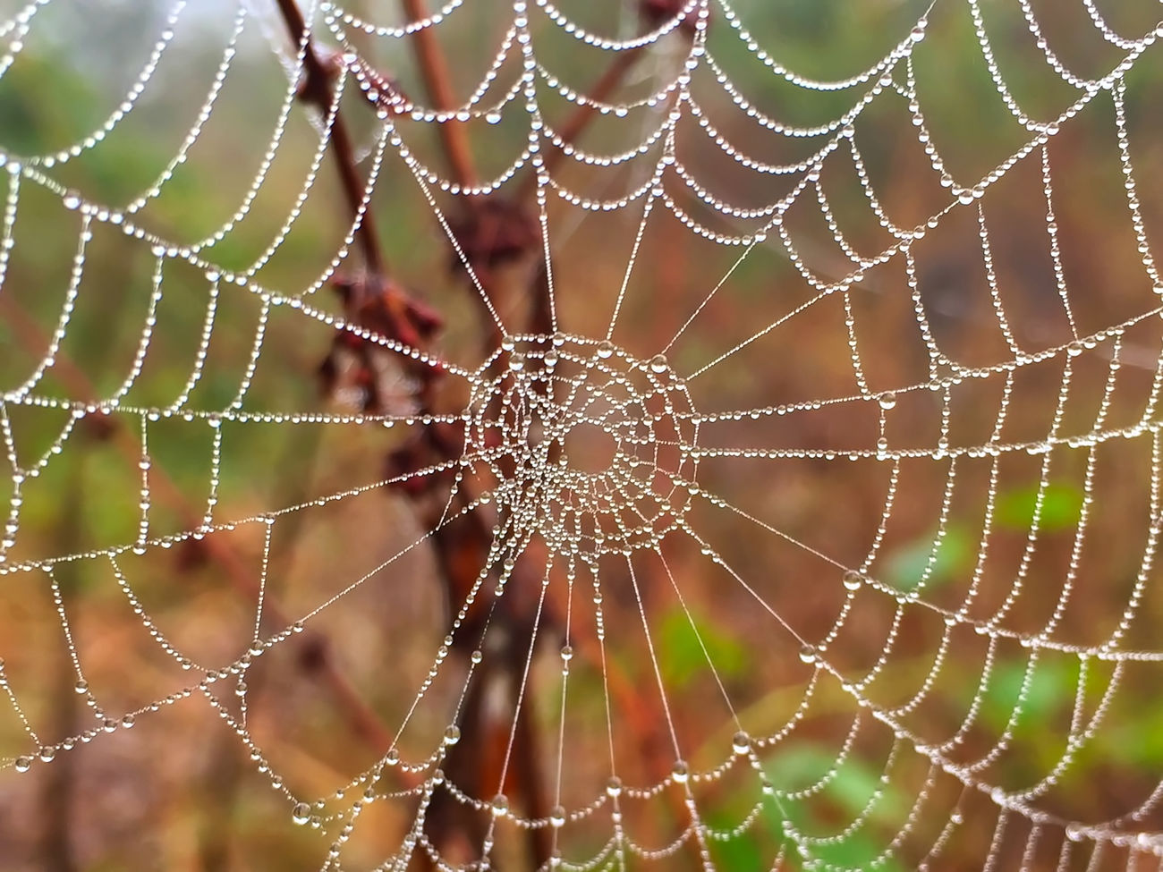 Spiders Web with morning dew Animal Leg Animal Themes Animal Wildlife Animals In The Wild Backgrounds Beauty In Nature Close-up Complexity Day Focus On Foreground Fragility Insect Intricacy Nature No People One Animal Outdoors Spider Spider Web Spinning Survival Weaving Web