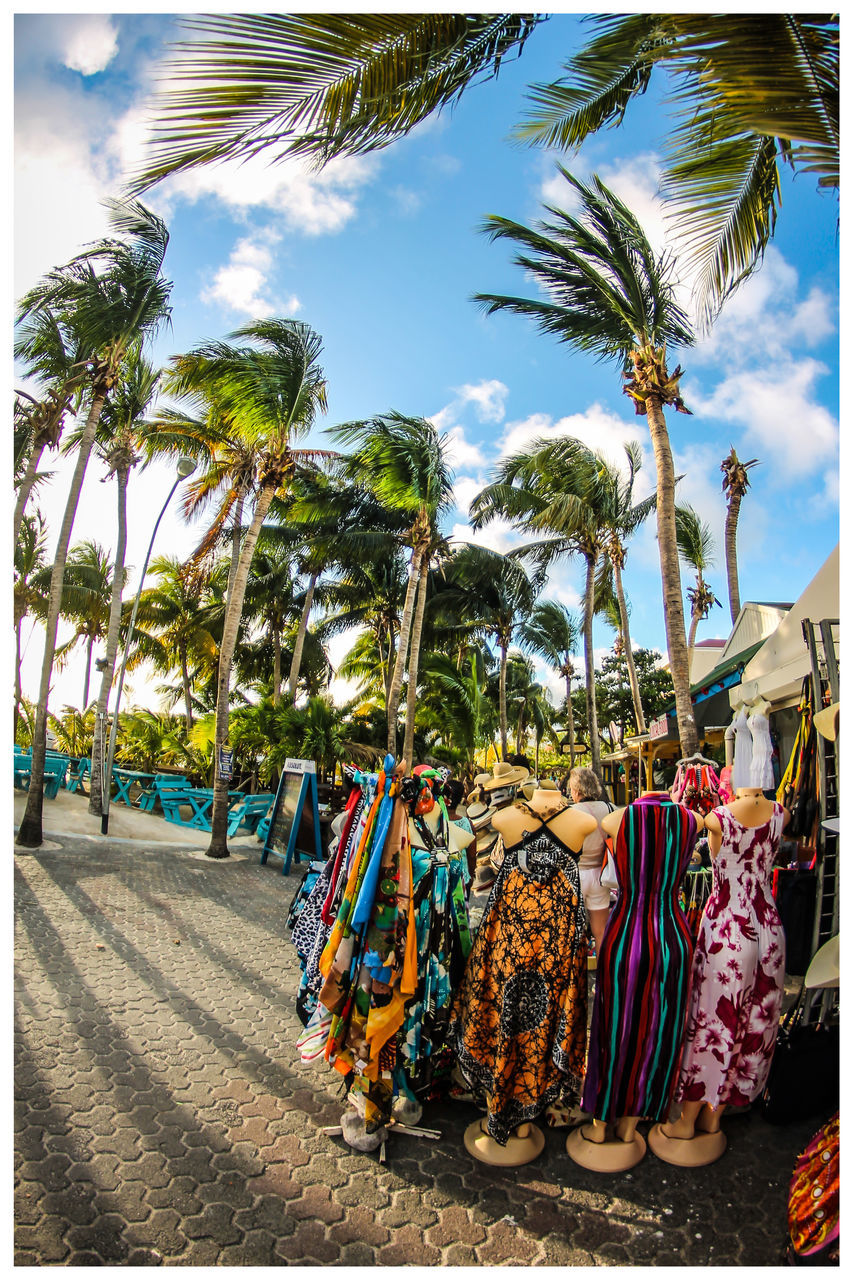 palm tree, tree, day, variation, hanging, in a row, sky, multi colored, large group of objects, sunlight, choice, no people, retail, outdoors, beach, nature