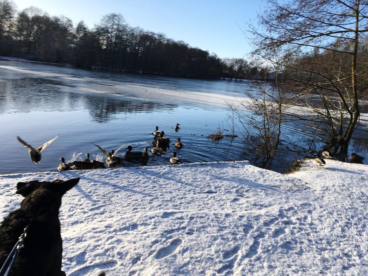 No People Oldenburg Running Dog Shaky Cam Scaring Ducks Sky Water Lake Winter Nature