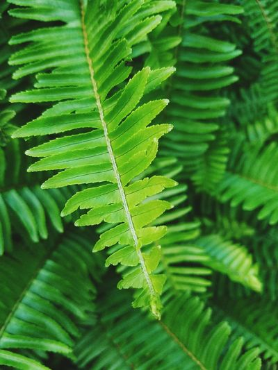Leaf Green Color Fern Nature Plant Frond Beauty In Nature Fragility Freshness Color Palette Still Life Abstractions In Colors Shapes And Textures Abstract Light And Shadow Growth Popular Shapes And Forms Macro Beauty Minimalism