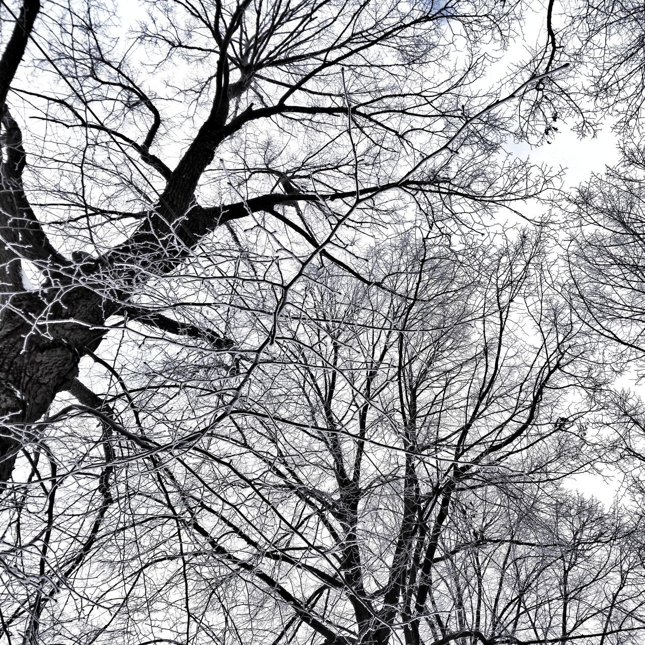 Tree Nature Beauty In NatureWinter Day Bare Tree Sky Snow Cold Temperature Weather City Enjoying Life Hello World